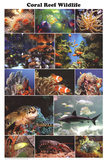 Laminated Coral Reef Marine Wildlife Educational Chart Poster Prints