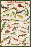 Exotic Lizards Reptiles Educational Science Chart Poster Plakaty