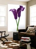 Innes Ivor Purple Callas Flower Mini Mural Huge Poster Art Print - Duvar Resimleri