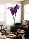 Innes Ivor Purple Callas Flower Mini Mural Huge Poster Art Print Wall Mural