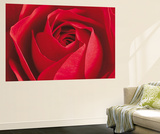 The Rose Flower Mini Mural Huge Poster Art Print Wall Mural