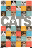Cats ABCs Art Print Poster Prints