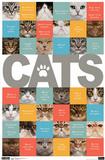 Cats ABCs Art Print Poster Prints