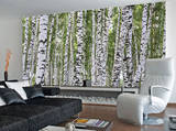 Forest of Birch Trees Mural de papel de parede