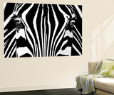 Rocco Sette Black and White Zebra Mini Mural Huge Poster Art Print Mural de papel de parede