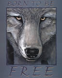 Wolf Eyes Born to be Free Art Print Poster Pósters