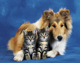 Friends Forever (Dog & Cats) Art Poster Print Posters