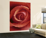Red Rose Huge Wall Mural Art Print Poster Wallpaper Mural