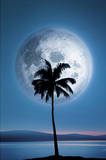 Dreamland (Palm Tree & Moon) Art Poster Print Posters