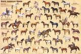 Laminated North American Horses Animal Chart Poster Kunstdrucke