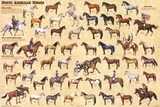 Laminated North American Horses Animal Chart Poster Prints
