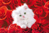 White Cat (Red Roses) Art Poster Print Print