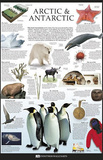 Arctic and Antarctic Dorling Kindersley Educational Poster Print Prints