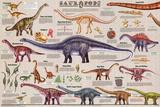 Sauropods Educational Dinosaur Science Chart Poster Plakaty