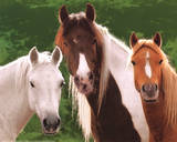 Tres Caballos (Three Horses) Art Poster Print Photo