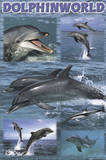 Dolphin World (Dolphin Wildlife Collage) Art Poster Print Photo