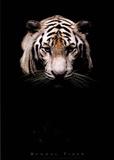 Bengal Tiger Art Print Poster Prints