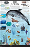 The Ocean Dorling Kindersley Educational Poster Print Prints