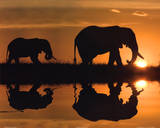 Jim Zuckerman African Silhouette Art Print Poster Posters