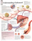Laminated Understanding Cholesterol Educational Chart Poster Kunstdruck