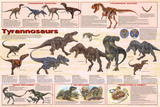 Laminated Tyrannosaurs Educational Dinosaur Science Chart Poster Posters