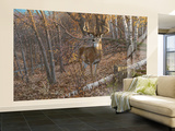 Great Eight Big Buck Deer Wall Mural