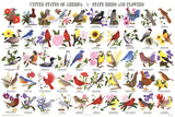 Laminated State Birds and Flowers Educational Chart Poster Posters