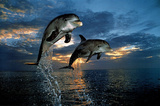 Flight of Two Dolphins (Jumping, Sunset) Art Poster Print Prints
