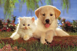 Real Pals (Puppy Kitten) Art Poster Print Poster