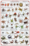 Laminated Arachnida Spiders Educational Science Chart Poster Reprodukcje