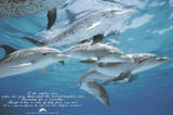Dolphins (Friends of Man) Art Poster Print Prints