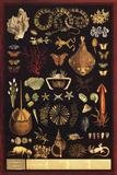 Laminated Curiosity Cabinet Under Water Educational Chart Poster Prints