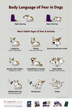 Body Language of Fear in Dogs Animal Poster Pósters