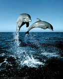 Dolphins Leaping Out of Water Art Print Poster Posters