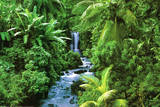 Rainforest (Waterfall) Art Poster Print Posters