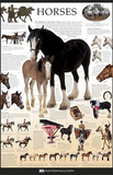 Horses Dorling Kindersley Educational Poster Print Photo