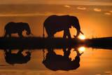 Jim Zuckerman African Silhouette Elephants Art Print Poster Plakaty