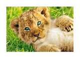 Lion Cub in Grass Art Print Poster Print