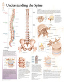 Laminated Understanding the Spine Educational Chart Poster Poster