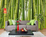 Bamboo Forest Wallpaper Mural