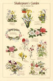 Shakespeare's Garden Flowers From Plays Chart Poster - Art Print