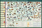 Milestones of Evolution Educational Science Chart Poster Pôsters