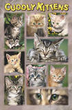 Cuddly Kittens (Cute Cat Collage) Art Poster Print Prints