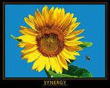 Sunflower (Synergy) Art Poster Print Poster