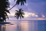 Tropical Sunset (Palm Trees Over Water, Huge) Art Poster Print Plakater