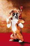 Knock Out (Boxer Puppy in Ring) Art Poster Print Prints