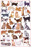 Laminated Cats of the World Educational Science Chart Poster Poster