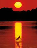 Hank Gans (Sunset in the Florida Keys) Art Poster Print Poster