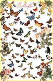 Variety of Butterflies Educational Chart Poster Photo