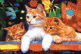 Rob Hefferan (Happy Cats) Art Poster Print Poster